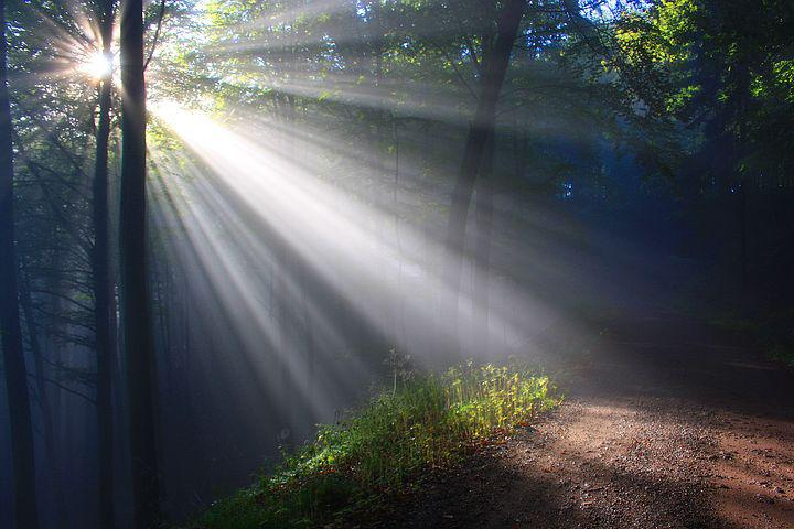 sunlight shining through the trees